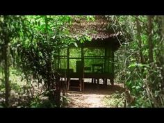 """The Sacred Science: A highly illuminating and compelling documentary about """"ancient yet immediately relevant healing strategies"""" -- how Amazonian medicine can effectively address diseases thought to be incurable."""