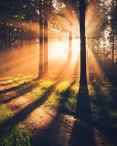 New Nature Wallpaper Forest Walks Ideas Beautiful Sunset, Beautiful World, Beautiful Places, Beautiful Pictures, Landscape Photography, Nature Photography, Foto Portrait, Fotografia Macro, Nature Wallpaper