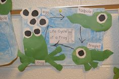 Frog Life Cycle Art Project...SO CUTE!!!!!