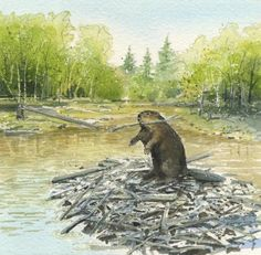 Beavers Painting by Denny Bond - Beavers Fine Art Prints and Posters for Sale