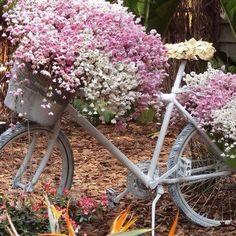 rises cycling