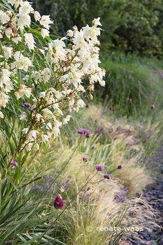Gravel Garden - Sonnenbeete mit Schotter Yucca, Stipa tenuissima, Allium sphaerocephalon und Verbenen