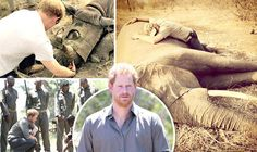 PRINCE HARRY has lashed out at the senseless slaughter of elephants and rhinos in a moving personal trip to an animal conservation park.