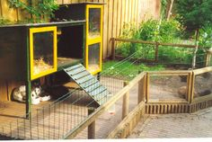 Hutch and play area for rabbits!
