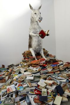 Anyone and everyone can read a book.
