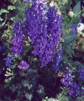 Δελφίνια Flowers, Plants, Gardening, Decoration, Decor, Lawn And Garden, Decorations, Plant, Decorating