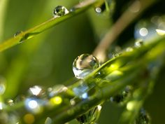 Google Image Result for http://www.wallcoo.net/nature/Vista_plants_wallpapers_pack_13/images/water_drops_on_leaves_vplants_x3_0022.jpg