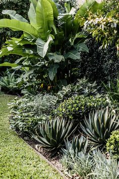 Harrison's are the experts at maintaining beautiful gardens. Our garden maintenance team services all areas of Sydney. Landscape Design Plans, Garden Design Plans, Landscape Architecture Design, Succulent Landscaping, Backyard Landscaping, Landscaping Ideas, Landscaping Software, Agave Blue Glow, Agaves