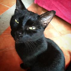 Nero ❤️❤️#mygreatcat #my_loving_pet #cat #gatto #catoftheday #catsofinstagram #catstagram #gatti #instacat #instacat_meows #bestmeow #topcatphoto #miao #catlover #gatto #catoftheday #katze #gato #chat #猫  #neko #猫好き #Exellent_Cats #子猫 #プッシーキャット #ニャー #甘い #愛猫