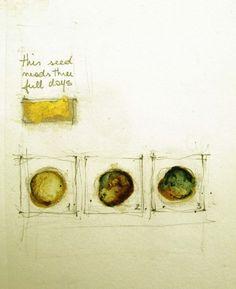 "Luisa Sartori go to ""Seeds & Stars"" images Ink, Graphite, gold leaf on paper"