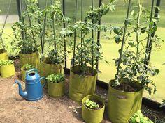 Tomaten stuetzen
