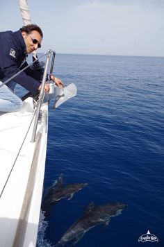more amazing dolphins while sailing in Sicily