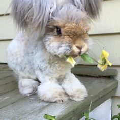 "Wally, The Adopted Rabbit (Find him in Instagram): ""A flower for all my FOLLOWERS!"" Wally, that's very thoughtful of you! ... Wally! Remember you give the flower as a gift, you don't eat it!"