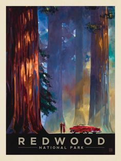 Anderson Design Group – American National Parks – Redwood National Park: Among the Giants
