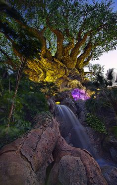 Animal Kingdom Tree of Life...I have never seen this water fall!!