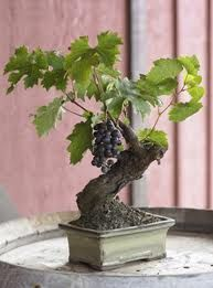 grape centerpiece idea