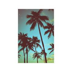 Vintage Tropical Palms Photographic Wall Art Print (1,850 DOP) ❤ liked on Polyvore featuring home, home decor, wall art, athletes, athletes by sport, basketball players, celebrities by talent, entertainment, m and people