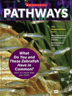 The regeneration issue of Pathways provides educators with free STEM and ELA resources to introduce students to the amazing world of regeneration research, how it can improve people's health, and the inspiring scientists working in this field. The collection includes a student magazine, teaching guide with lessons and activities, and a vocabulary list. Biomedical Science, Vocabulary List, Animal Science, Future Jobs, Learning Resources, Pathways, Scientists, How To Introduce Yourself, Students