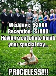 What's funny about this pic is the idea of a $3000 wedding.
