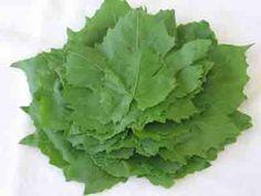 abelofylla yia ntolmades grape leaves for dolmades stacked Grape Leaves Recipe, Vine Leaves, Preserving Food, Greek Recipes, No Cook Meals, Grape Vines, Preserves, Food Inspiration, Frozen