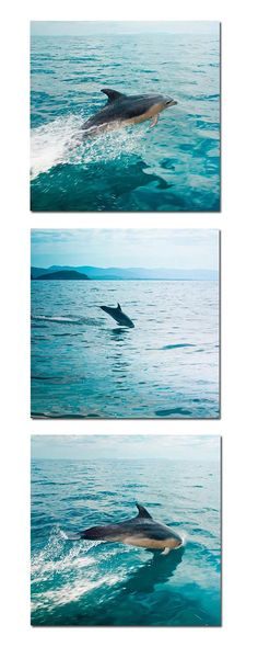 Ocean life photography dolphins.. We don't want to loose this beautiful sights ..keep our oceans clean