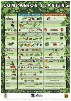 Great guide to gardening - companion planting, great resource for making the most out of a small garden