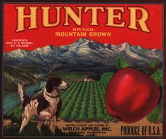 Hunter brand vintage apple crate label, Welch Apples (Wenatchee, WA)
