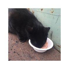 身為貓奴每次遇到浪浪都超心疼他們😢😢 永遠不知道下一餐在哪, 我能做的也只有讓他們好好的飽餐一頓😭 - 這黑貓貓真的超親人啦,我走到哪他跟到哪🐱 相比之下仔仔真幸福😂💕 - #心疼 #貓 #貓咪 #貓奴 #黑貓 #浪浪 #吃#肉 #black#cat #cats #catlover #meow #love #pet #Straycat #eat#meat #cute #lovely #help#them #sad #distressed #likeforlike #catsofinstagram #instagood