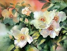 Watercolour / Winsor and Newton Artist& watercolours on Arches paper. / I loved this simple open rose and the warm colours of the wall behind where it was growing. Art Floral, Watercolor Rose, Watercolor Paintings, Watercolours, White Flowers, Beautiful Flowers, Simply Beautiful, Open Rose, Photo D Art