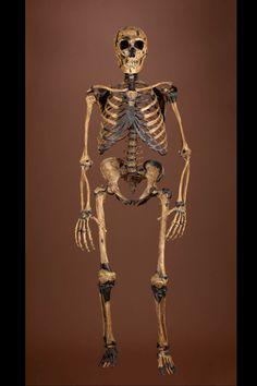 Composite Neanderthal Skeleton; Neanderthal DNA.