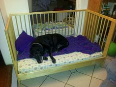 Re-purpose a crib into a dog bed! Great for older dogs who can't get into chairs and need to be off cold floors.