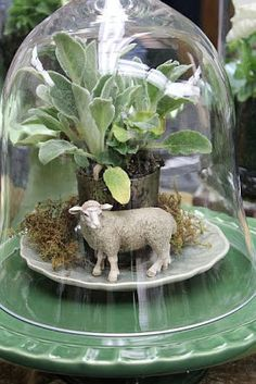 "Directions for DIY Terrariums and Cloches - I especially love this for Easter. Under a glass cloche, use a plastic toy lamb with a small ""lambs ear"" plant and moss. The plant is potted in a small votive candle holder. Terrarium Diy, Glass Terrarium, Cloche Decor, The Bell Jar, Bell Jars, Deco Floral, Easter Table, Easter Party, Glass Domes"