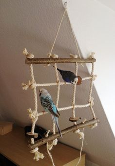 Kletternetz Für Wellensittich Nymphensittich Co Ses Vogelspielzeug Ist Das Perfekte Turnspielplatz