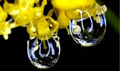 一滴露中一世界,唯美雨滴摄影作品欣赏