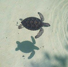 I can't wait to go see the turtles with u one day.