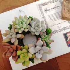 モスのカップケーキ多肉アレンジの画像:花と緑の日記