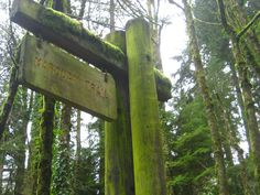 Marquam Trail to Council Crest: Muddy, good architecture amongst the trees, great view and story at the top!
