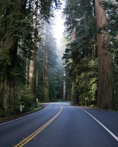 Green trees in the road naturel painting Beautiful Roads, Beautiful Places, Beautiful Scenery, Redwood Forest, Forest Road, Back Road, Landscape Photographers, Nature Pictures, The Great Outdoors