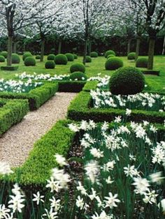 Narcissus in parterre spring Boxwood Garden, Topiary Garden, Boxwood Hedge, Boxwood Topiary, Moon Garden, Dream Garden, Formal Gardens, Outdoor Gardens, Modern Gardens