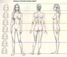 Пропорции женского тела - חיפוש ב-Google