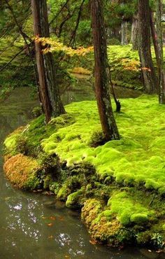The moss garden at Saihō-ji (西芳寺), a Rinzai Zen Buddhist temple located in Matsuo, Nishikyō Ward, Kyoto, Japan. Mother Earth, Mother Nature, Palette Verte, Jardim Natural, Beautiful World, Beautiful Places, Foto Nature, Nature Nature, Japan Photo