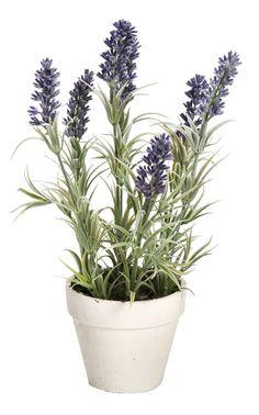 Lavendel in pot: altijd kleur op je terras #leenbakker #terrasideeen