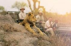 SAFARI SPECIALS – See our various Specials we have on offer for 2015