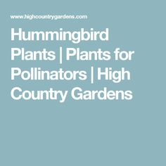 Hummingbird Plants | Plants for Pollinators | High Country Gardens