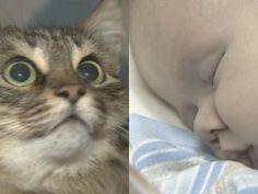Russie: Un chat sauve un bébé abandonné en le protégeant du froid • Hellocoton.fr