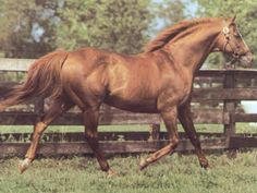 PRINCE JOHN  BY prince Quillo, see Mossman Horse Pedigree