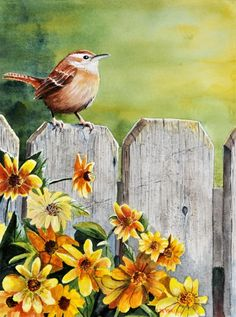 Hello Morning - John W Walker.  Hello Morning and 'Hello' little Wren!