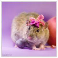 Fenrir 8 - Fancy rat by DianePhotos