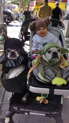 Baby Leila, Darth Vader and the Jedi Master getting ready for Halloween! (The Bostons don't look too happy about it though.)