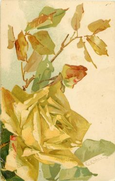 Vintage yellow roses postcard by Catherine Klein